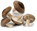 ShiiTake(Holland)
